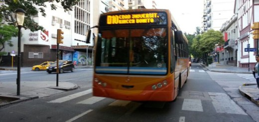 Colectivo-Diferencial-Coniferal-D10