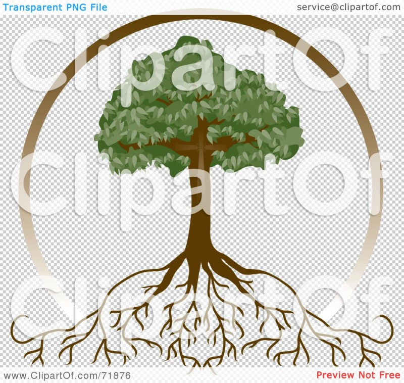 Large Of Tree With Deep Roots