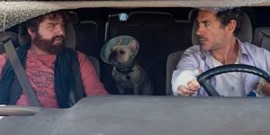 Zach Galifianakis and Robert Downey Jr. star in Due Date