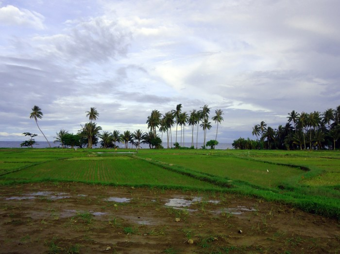 rice paddy - Camiguin, Philippines