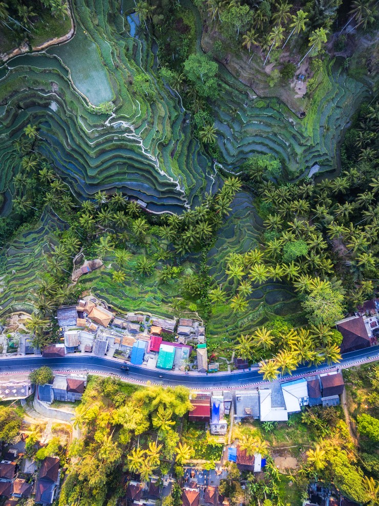 The beauty of bali from the sky resource travel for Tegalalang rice terrace ubud