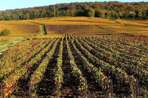 Champagne vineyards adorned with autumn colors, after the harvest, in Mailly-Champagne near Reims, FRANCOIS NASCIMBENI/AFP/Getty Images