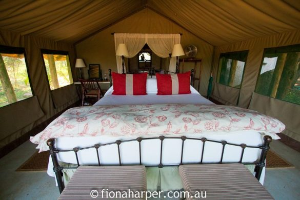 Tanda Tula Safari Camp, South Africa. Accommodation is 'glamping-style' in luxury tents in Timbavati Private Nature Reserve (Kurger National Park)