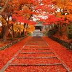 京都の観光はとても素敵!穴場スポット厳選5【秋編】