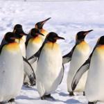 冬の旭山動物園を楽しもう!混雑状況や営業時間をご紹介!