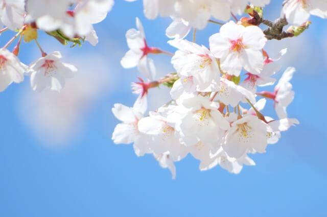 春休みの旅行!カップルにおすすめのスポットをご紹介!