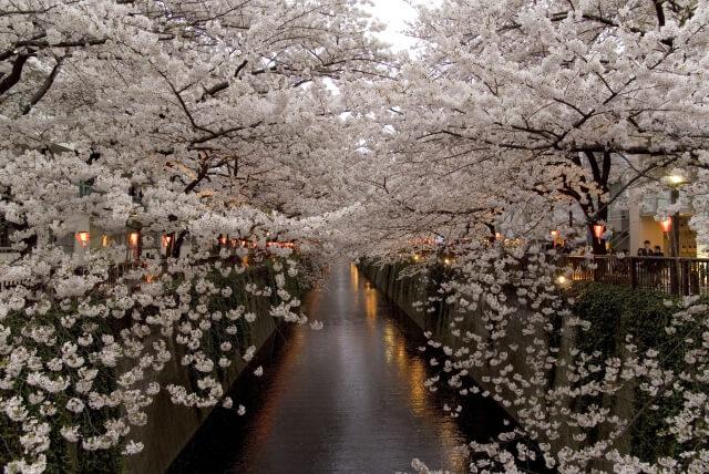 関東で2016年お花見をするにはこのスポット!