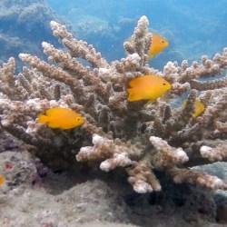 Deep Sea Diving off Wilson Island