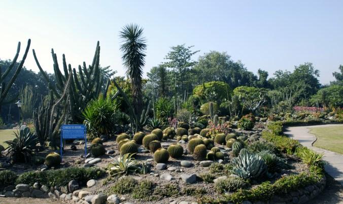 Botanical-Garden-Chandigarh