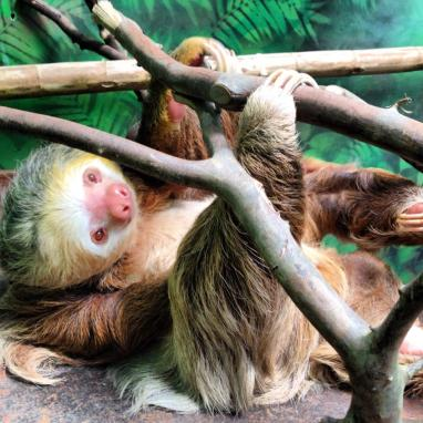 Sloth Sanctuary of Costa Rica