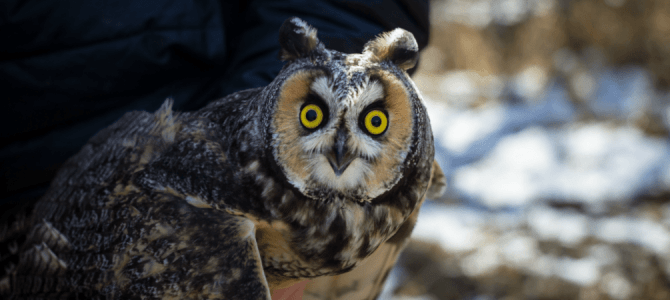 The Long Term Business of Owls