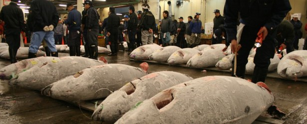 TUNA SLAUGHTERHOUSE