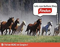 Do the Findus executives laugh, too?