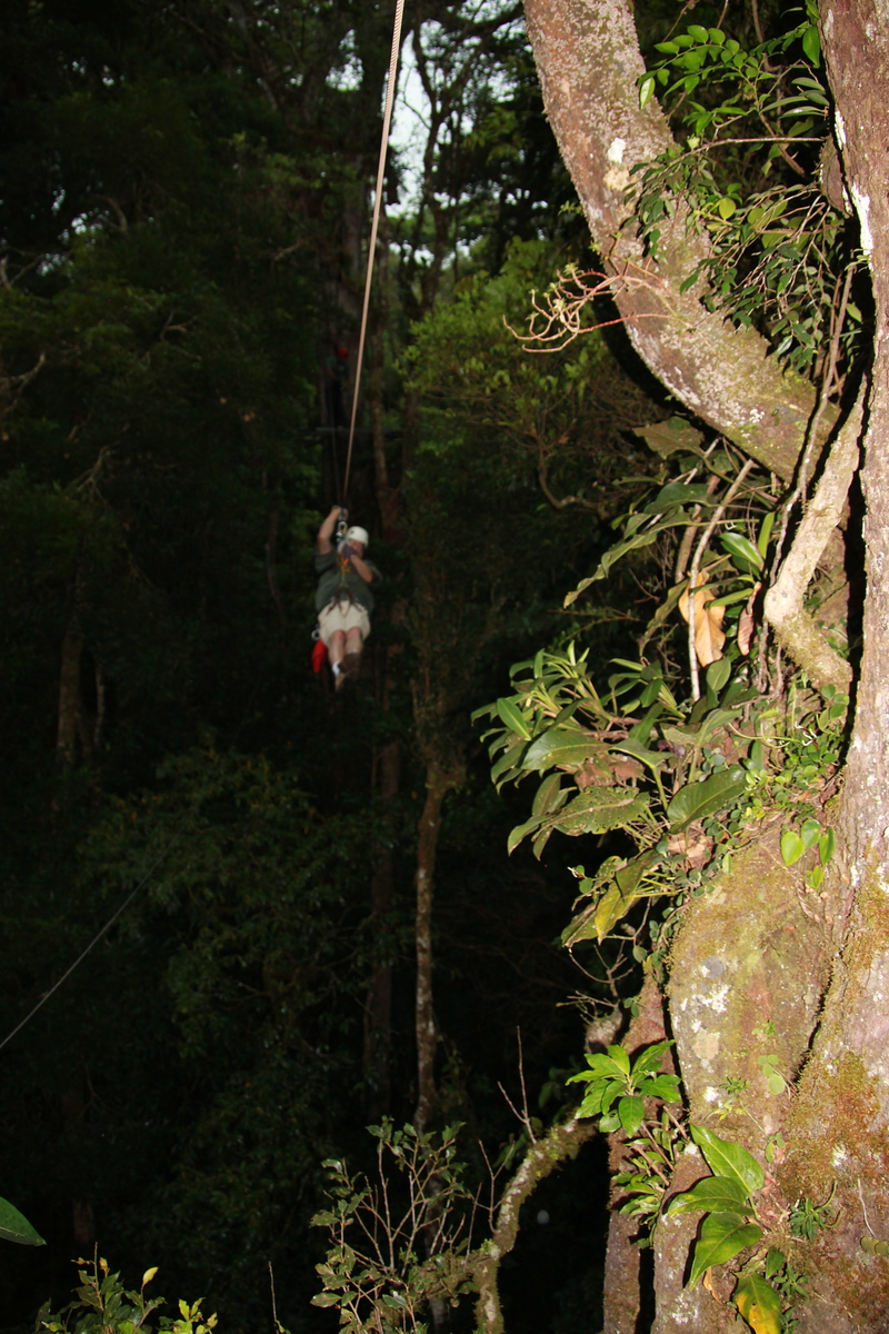 Zipline, Original Canopy Tour - Monteverde, Costa Rica - Photo