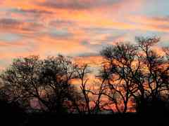 Have you ever seen a Sunrise in Sabi?
