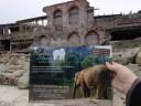 www.elephanthaven.org visits Battleship Island
