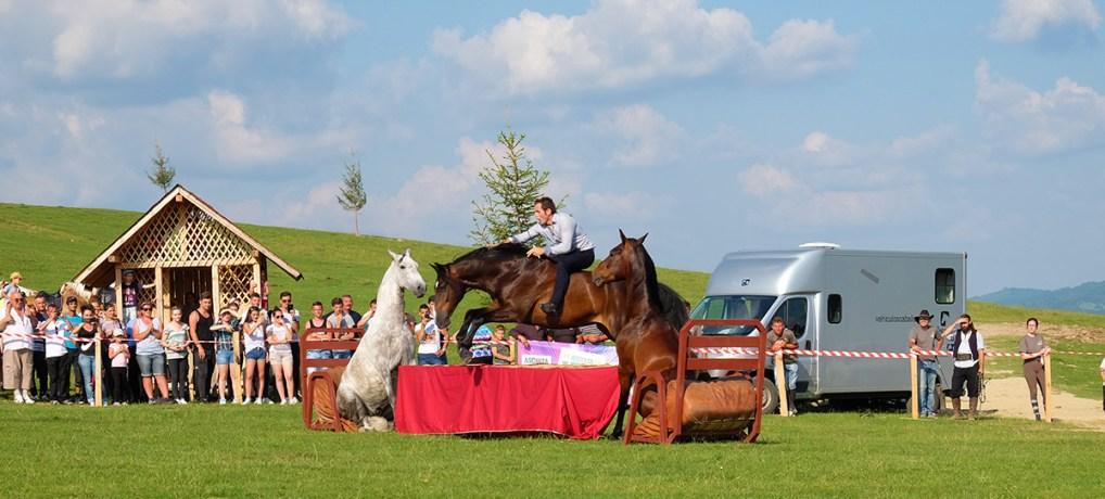Haidook Summer Fest – festival dedicat iubitorilor de cai