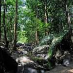 Through the jungle to the Dudhsagar Falls, Goa