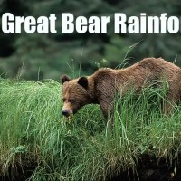 Spring watch in British Columbia and the Great Bear Rainforest