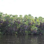 Boat_to_Lamanai_Belize_Travel_Xena_16