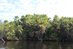 Boat_to_Lamanai_Belize_Travel_Xena_17
