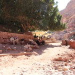 Petra_Jordan_Middle_East_TravelXena_130