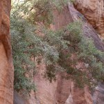 Petra_Jordan_Middle_East_TravelXena_240
