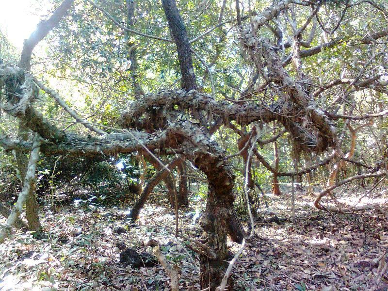 Phansad Wildlife Sanctuary - dense forest