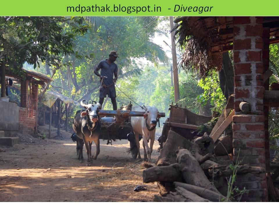 dive-agar-bullock-cart