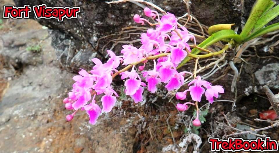 beautiful wild flowersin sahyadri