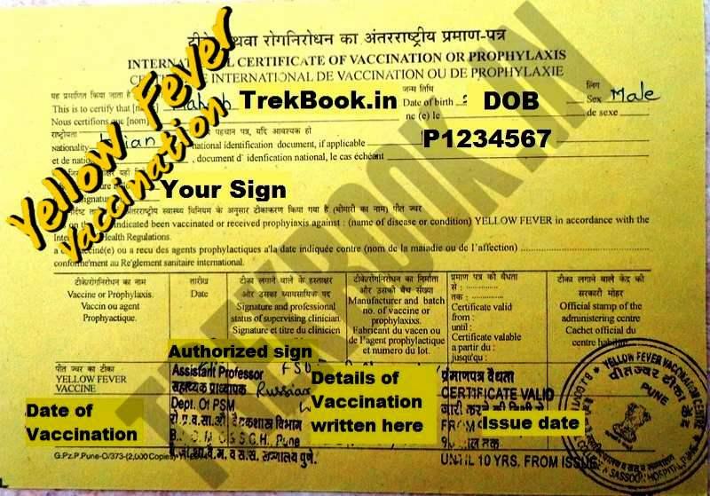 yellow fever international certificate sasoon hospital india