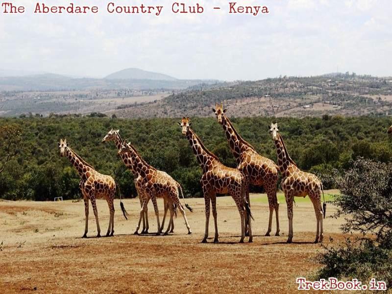 the aberdare country club Giraffe 1