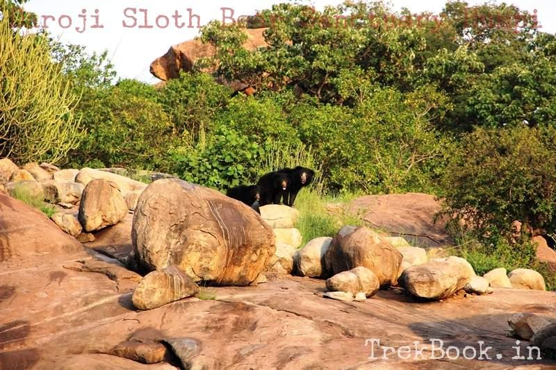 School students bear at Daroji Sloth Bear Sanctuary Humpi