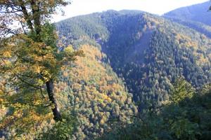 L'immense forêt des Carpates en Europe Centrale, le parc nationnal de Mala Fatra.