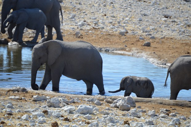elephant_watering hold