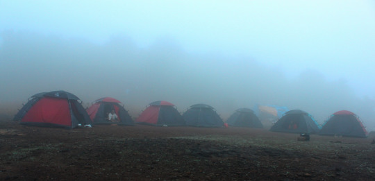 Misty Camp Site