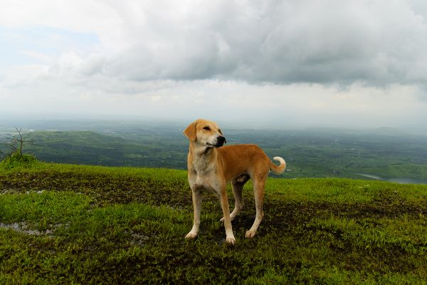 This dog tagged along for pretty much the entire trek