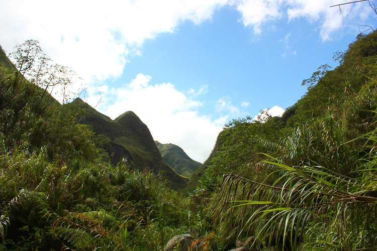 Soon we trek through a dense forest on our way up