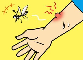 蚊に刺されたら