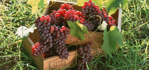 This is How Grapes Can Improve Your Health