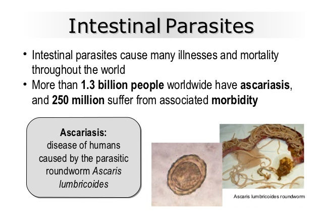 What are Intestinal Parasites?