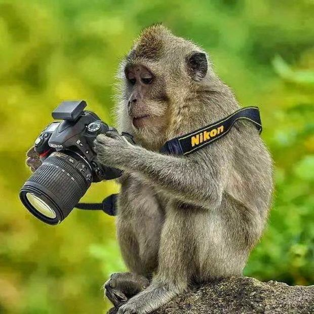 Monkey with camera in hand