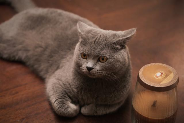 Cats can protect from curse and evil eye