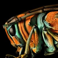 Microsculpture - The Insect photography of Levon Biss