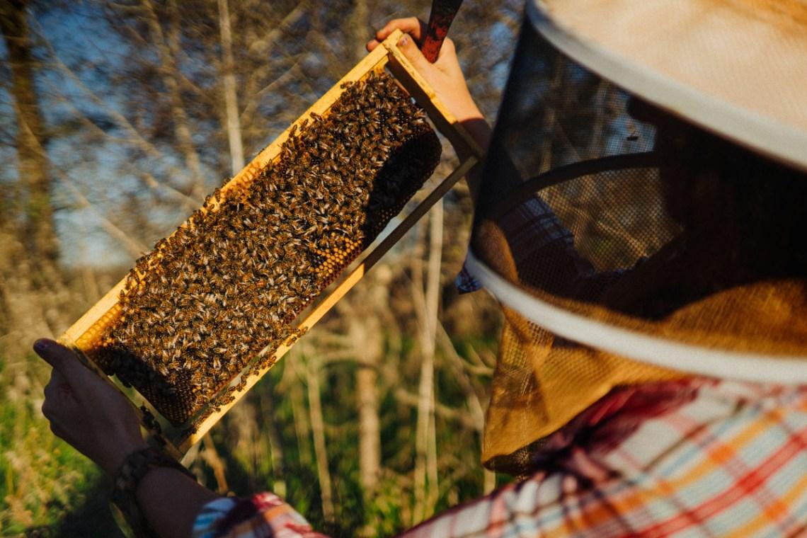 Tribeza Bees spread 3