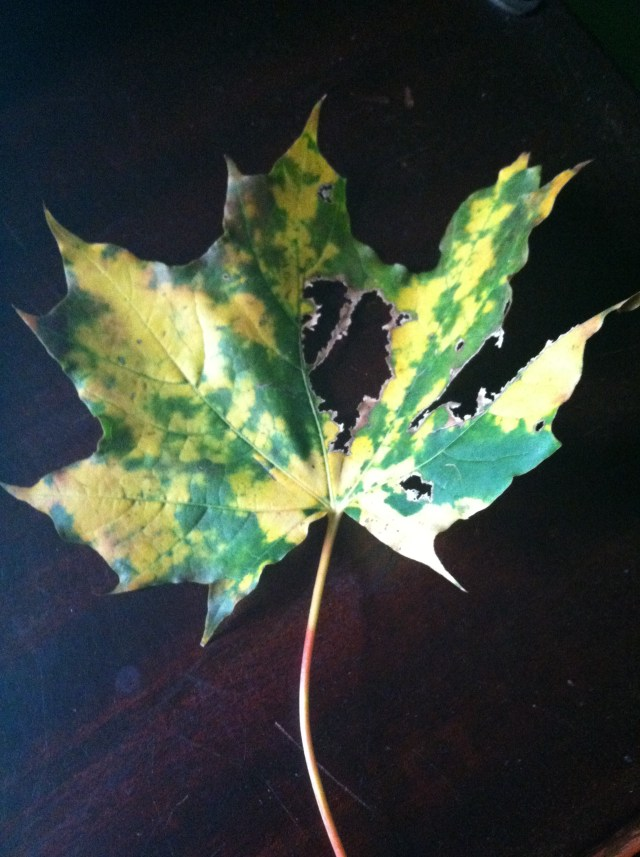 Battered leaf