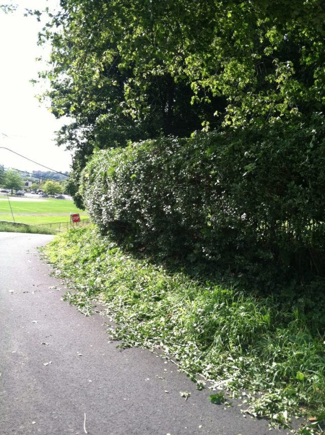 after hedge