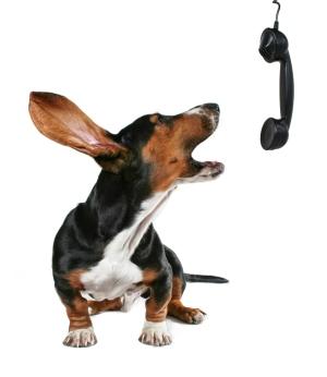 hond-blaft-in-telefoon-gefrustreerd