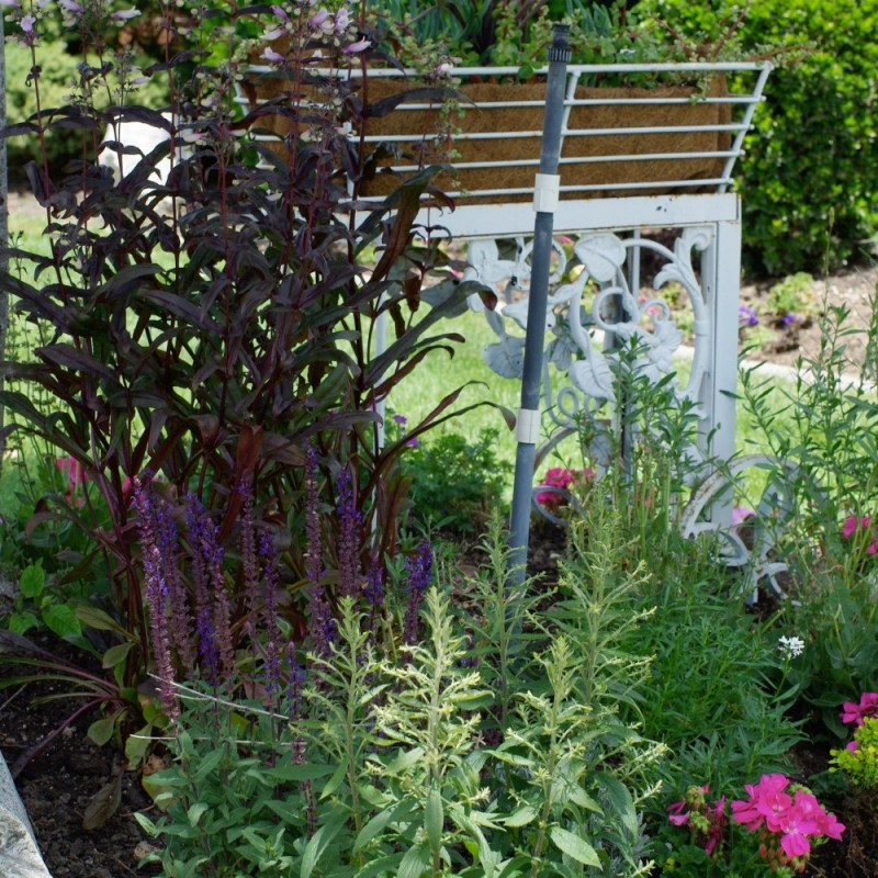 A VISIT TO MY WHIMSICAL GARDEN