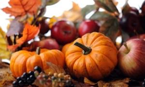 November Newsletter Now Available Online